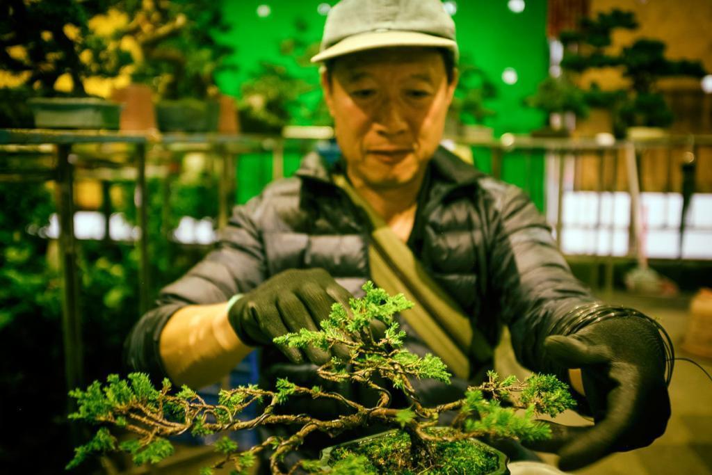 Jianguo Çiçek Pazarı Bonsai ağacı.